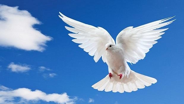 CHƯƠNG TRÌNH THỜ PHƯỢNG BAN NAM GIỚI. 07.06.2020